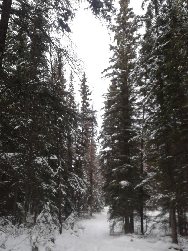Trail to Tekarra Lodge