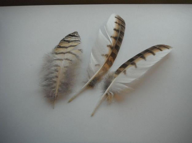 Three Feathers - Owl?